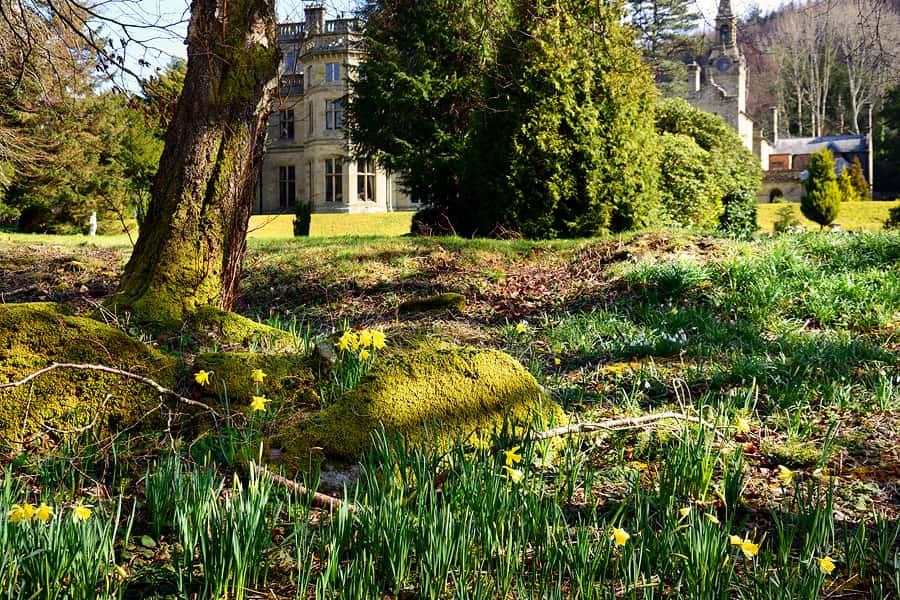 Palé Hall spring daffodils