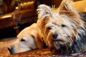 Dog-friendly hotel Snowdonia