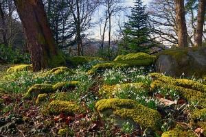 Palé Hall garden spring