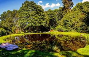 Palé Hall pond