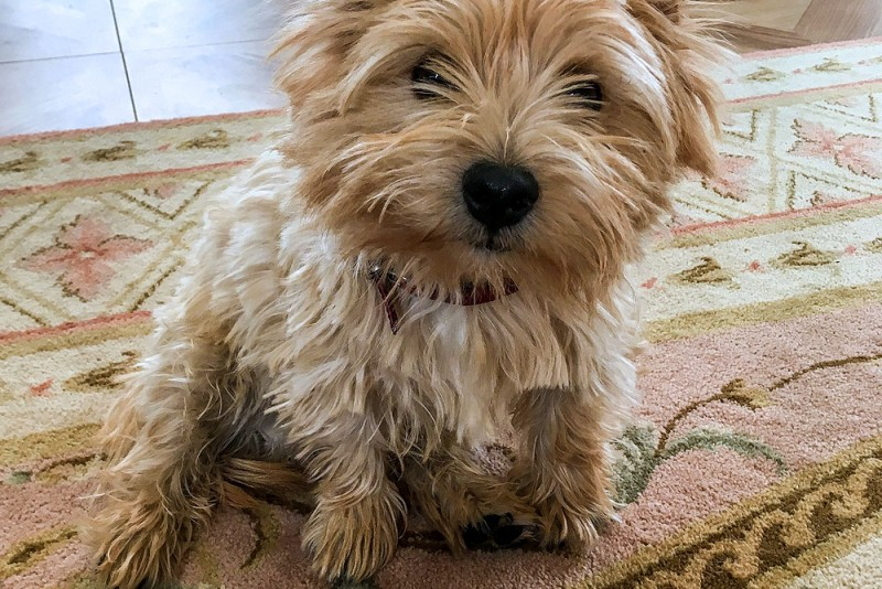 Ted the terrier