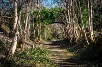 Llandderfel Ruabon-Barmouth line