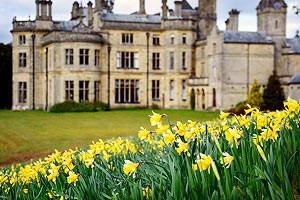 Spring daffodils at Palé Hall.