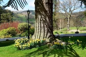 Palé Hall garden