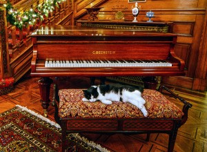 Black white cat piano