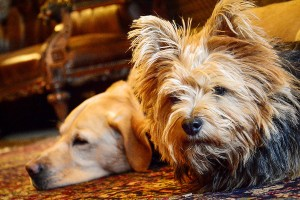 Palé Hall Hotel dog friendly