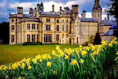 Wales, daffodils, Palé Hall