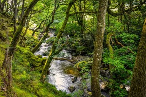 Snowdonia woodland valley stream