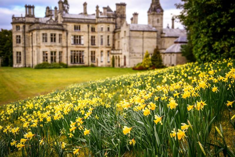 Spring daffodils at Palé Hall