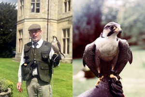 Palé Hall birds of prey