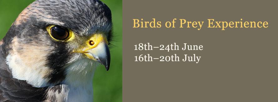 Palé Hall birds of prey experience